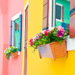 Colorful of flower on window — Stock Photo