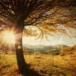 Lonely beautiful autumn tree - vintage photo — Stock Photo #15387925