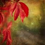 Autumn leaves - grunge background — Stock Photo