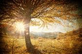 Yalnız güzel sonbahar ağaç - vintage fotoğraf — Stok fotoğraf