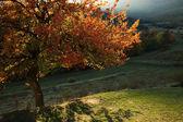 одинокая красивая осень дерево — Стоковое фото