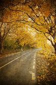 Foto de época de curvar camino en bosque otoñal — Foto de Stock