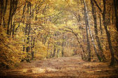 Vintage photo of curving road in autumn forest — Stock Photo