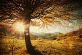 Lonely beautiful autumn tree - vintage photo — Stock Photo