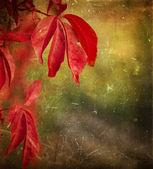 Podzimní listí - grunge pozadí — Stock fotografie
