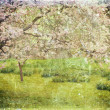 Cherry tree on grunge paper texture — Stock Photo