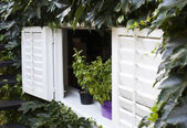 Rural house window twined by wild vine — Stock Photo