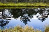 Reflets de lac de montagne — Photo