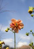 Honeybee sitting on wild flower — Stock Photo