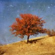 Lonely beautiful autumn tree — Stock Photo