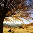 Colorful autumn tree at sunset with woman sitting and contemplating nature — ストック写真