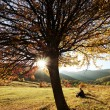 Colorful autumn tree at sunset with woman sitting and contemplating nature — Stok fotoğraf