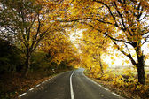A colourful curving autumn road — Stock Photo
