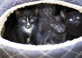 Cute black kittens — Stock Photo