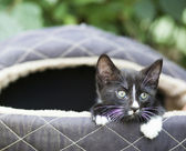 Cute black kitten — Stock Photo