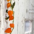 Physalis on wood — Stock Photo