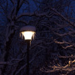 Street lighting lantern and trees covered with snow at night — Stok fotoğraf