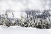 Christmas background with snowy fir trees — Stock Photo