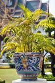 Planta em vaso — Foto Stock