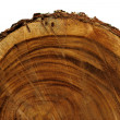 Surface of tree are used in industrial applications. — Stock Photo #33338703