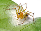 Spiders are laying eggs on the leaves. — Stock Photo