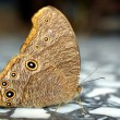 Butterfly on a marble floor. — Stock Photo