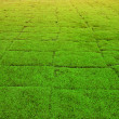 Dry  grass on the football field. — ストック写真