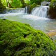 Moss on rock and waterfall in Than Bok Khorani National Park, Th — Stock Photo