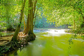Green water in the forest in Than Bok Khorani National Park, Tha — Stock Photo