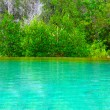 Hot spring salty green forest only one in Thailand. — Stock Photo