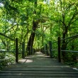 Wood bridge in national park — Stock Photo
