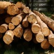 Timber for industrial applications. — Stock Photo