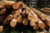木材産業用アプリケーション向け. — ストック写真