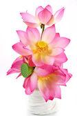 Lotus on isolate white background. — Foto Stock