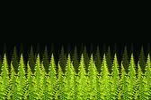 Green Boston Fern. Scientific name: Nephrolepis exaltata (L) Sch — Stock Photo