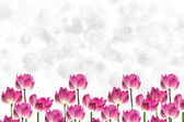 Lotus on isolate white background. — Stock Photo