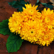 Постер, плакат: Yellow flower of Chrysanthemum Chrysanthemum indicum Linn