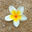 White and yellow frangipani flowers on sand. — Stock Photo #34440193