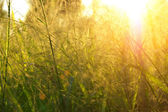 Grass in the summer and sunlight. — Stock Photo