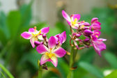 Ground orchid flowers in the tropical rain forest — Stock Photo