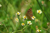 Butterfly fly in morning nature. — Foto Stock