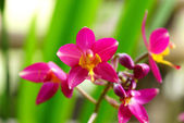Ground orchid flowers in the tropical rain forest — ストック写真