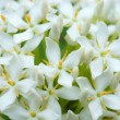 White flowers are fragrant refreshin — Stock Photo #34959171