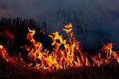 Fire grass spring — Stock Photo