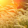 Flower grass impact sunlight. — Stock Photo #35140487