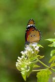 Oranje vlinder op bloem. (cethosia cyane) — Stockfoto