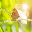 Beautiful butterfly on a blade of grass with Sunshine lights. — Foto de Stock