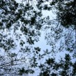 Abstract tree canopy background — Foto de stock #36487065