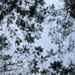 Abstract tree canopy background — Foto de stock #36487069