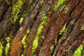 Bark and moss — Stock Photo